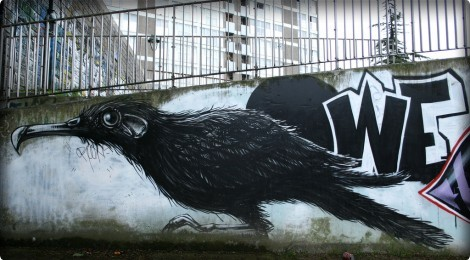 More news from Roa